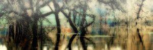 gary-cedar-photography-wetlands12