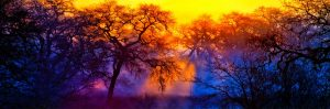 gary-cedar-photography-wetlands17