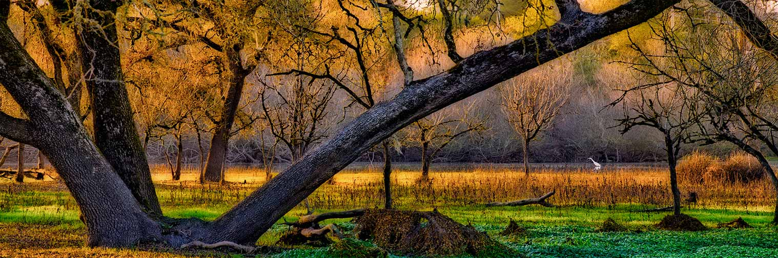 gary-cedar-photography-wetlands4