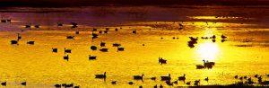 gary-cedar-photography-wetlands5